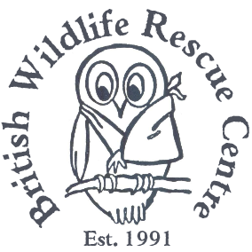 British wildlife rescue centre at SCT #8